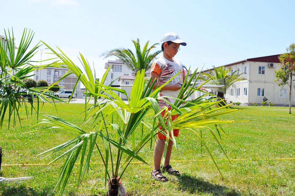 пальмы омега
